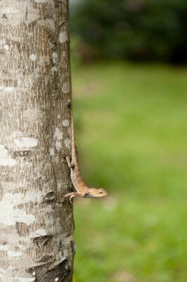 Affisch Utbytbara ödla på trädstam