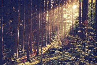 Affisch Vacker drömmande skog