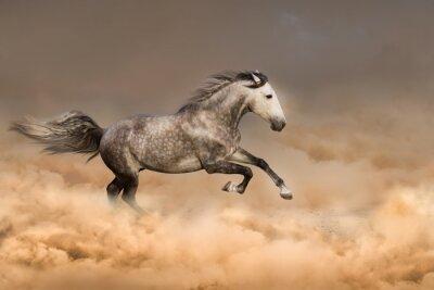 Affisch Vacker häst springa galopp i damm
