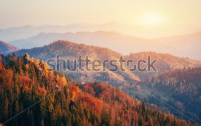 Affisch Vacker utsikt över skogen på en solig dag. Höstlandskap. Karpaterna. Ukraina, Europa
