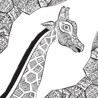 Affisch Vacker vuxen giraff. Handritad illustration av prydnads giraff. isolerad giraff på vit bakgrund. Chefen för en prydnads giraff