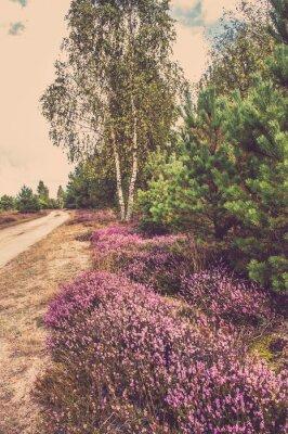 Affisch Vackra landskap av skog med blommande ljung av landsväg