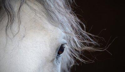 Affisch Vackra ögon av den vita hästen