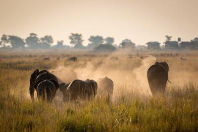 Affisch Vackra vilda djur på Chobe National Park, Botswana