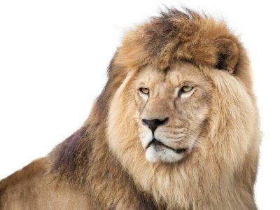 Affisch Vakande mäktig lion