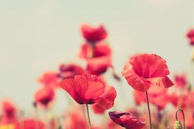 Affisch Vallmo blommor retro fredliga sommar bakgrund