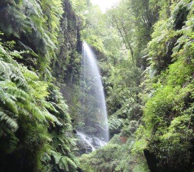 Affisch Vattenfall Cascada Los Tilos (La Palma, Kanarieöarna)