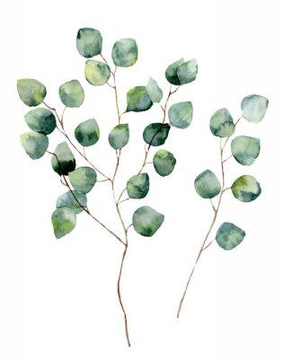 Affisch Vattenfärg silver dollar eukalyptus med runda blad och grenar. Handmålade eukalyptus element. Blom- illustration isolerad på vit bakgrund. För design, textil och bakgrund.