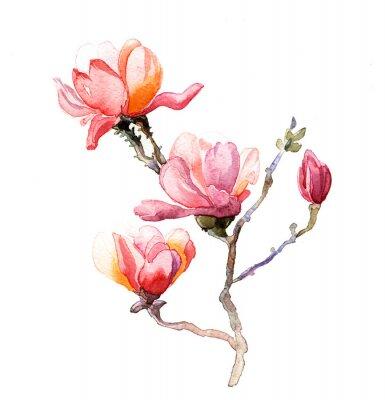 Affisch vattenfärgen magnolia isolerad på den vita bakgrunden