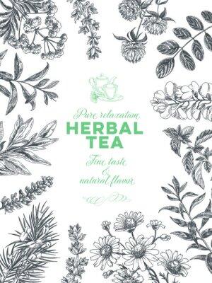 Affisch Vector hand drawn tea herb Illustration.