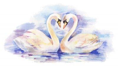 Affisch vektor akvarellillustration av par vita svanar