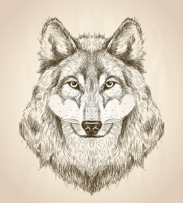 Affisch Vektor skiss illustration av en varg huvud framifrån.