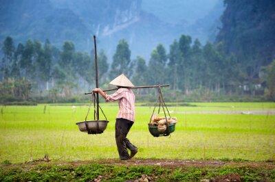 Affisch Vietnames bonde på ris risfält i Ninh Binh, Tam Coc. Ekologiskt jordbruk i Asien