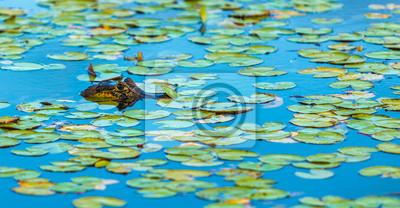 Affisch vild krokodil