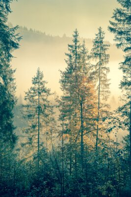 Affisch Vild skog i höst säsongen tid, vintagestil tonas