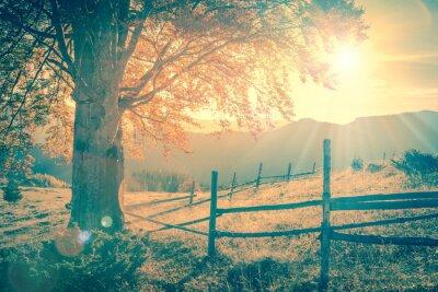 Affisch Vintage höst träd vid solnedgången med solstrålar, berg