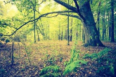 Affisch Vintagefoto av höst skogslandskap