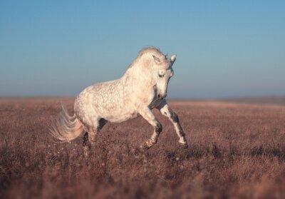 Affisch Vit häst run