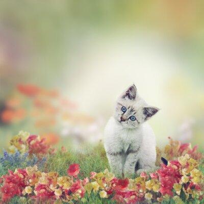 Affisch Vit kattunge i blommor