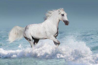 Affisch Vitarabhäst kör galopp i vågor i havet