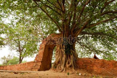 Affisch Wat Phra Ngam (övergiven) Ayutthaya Gate of Time Öppen är omgiven av pho.