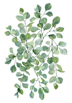 Affisch Watercolor banner background with hand painted silver dollar eucalyptus. Green branches and leaves isolated.  Floral illustration for wedding inspiration card, template, print.