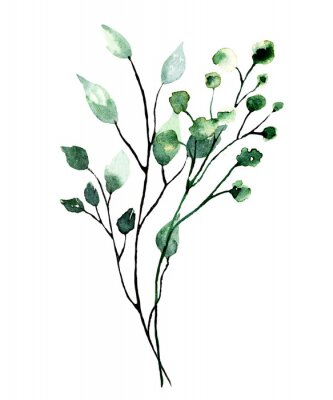 Affisch Watercolor branch with green leaves. Hand painting floral illustration. Leaf, plant isolated on white background.