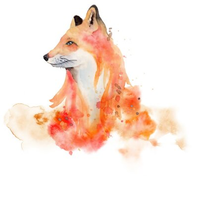 Affisch Watercolor fox  Animal illustration isolated on white background.