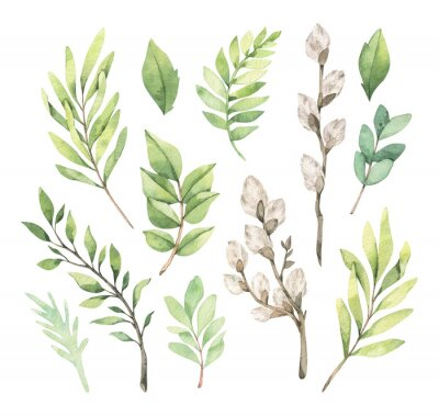 Affisch Watercolor illustrations with eucalyptus, green leaves and willow. Easter brunches. Spring greenery design elements. Perfect for cards, invitations, banners, posters.
