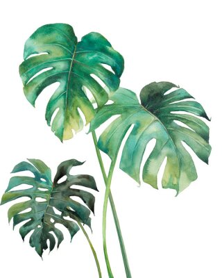 Affisch Watercolor tropical leaves poster. Hand painted exotic green branches isolated on white background. Summer plants illustration