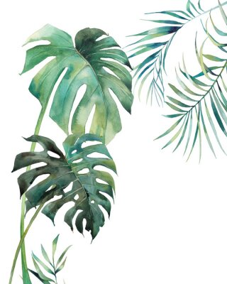 Affisch Watercolor tropical leaves poster. Hand painted exotic monstera and palm green branches isolated on white background. Summer plants illustration