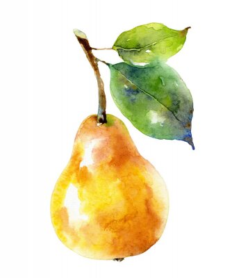 Affisch Watercolor yellow pear isolated on white background