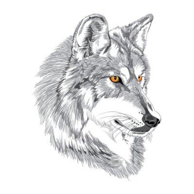 Affisch Wolf nosparti skiss