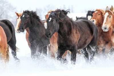 Affisch 冬 の 馬
