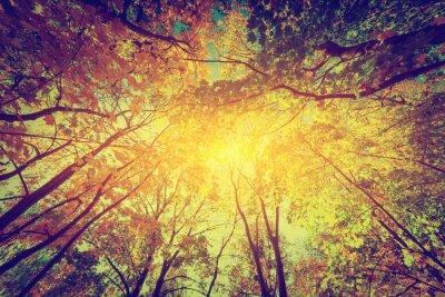 Affisch Höst, falla träd. Solen skiner genom färgglada löv. Årgång
