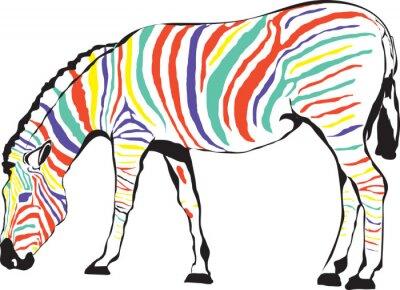 Affisch Zebra Kolorowa