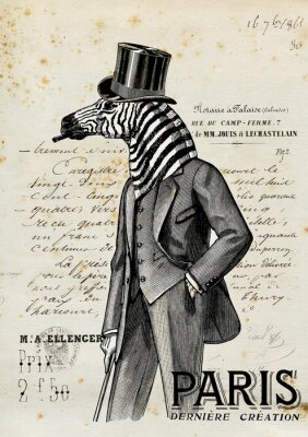 Affisch zebra man