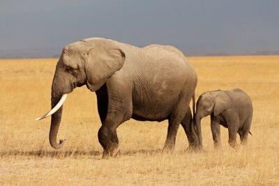 Canvastavlor Afrikansk elefant med kalv, Amboseli National Park