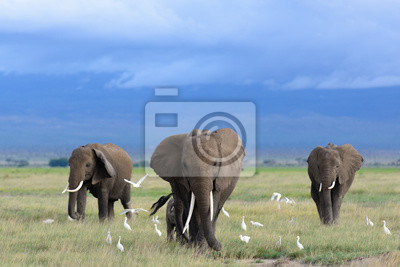 Canvastavlor Afrikanska elefanter / Kenya
