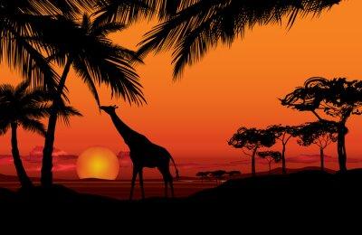 Canvastavlor Afrikanska landskapet med djur giraff silhuett. Savann natur solnedgång bakgrunden