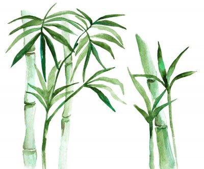 Canvastavlor Akvarell bambu illustration