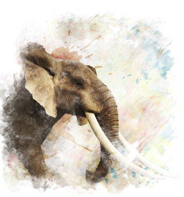 Canvastavlor Akvarell Bild Elephant