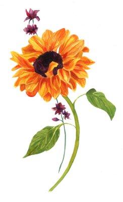 Canvastavlor Akvarell teckning av guld- solros med gröna blad på vit bakrund