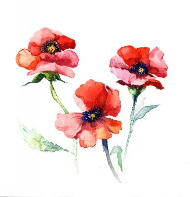 Canvastavlor akvarell vårblommor vallmo målning isolerad på den vita bakgrunden