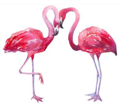 Canvastavlor akvarellillustration av en flamingo