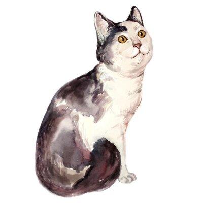Canvastavlor Akvarellillustration av fula katt ser förvirrad