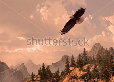 Canvastavlor Bald eagle soaring in the Rocky Mountain high country.