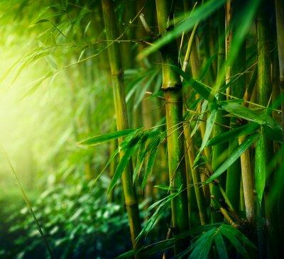 Canvastavlor Bambu