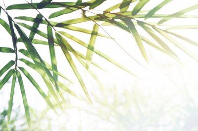 Canvastavlor Bambuskog eller bambu bladverk och solljus och utrymme för text