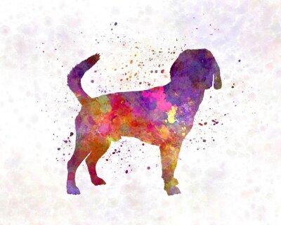 Canvastavlor Beagle Harrier i vattenfärg